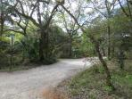 Oak Canopied Dirt Roads Run Through Seagrove Beach
