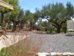 Gartenansicht mit Olivenbäumen Garden view with olive trees
