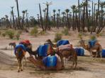vue dans la Palmeraie de Marrakech