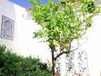 our lemon & rosmarins spot