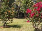 Beautiful and peaceful garden in peri-urban Lusaka. Thirty-minute drive to town.
