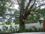 Tree near entrance