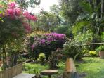 Gardens around the cottage/Jardines alrededor del estudio