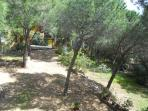 pineta - giardino