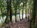 bosque limpio para disfrutar el rio