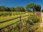 Close to Santa Barbara wine country