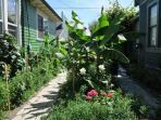 Garden. Walkway towards Bungalow. July 2015