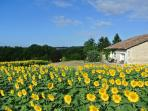 Gite L'Ecurie - surrounded by sunflowers - Summer 2015