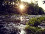 the creek in the garden