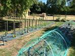 Le jardin potager : fraisiers, aubergines, poivrons, et courgettes