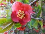 Springtime at Wee Glebe
