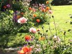 Herbaceous border in rear garden