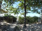 Um jardim de verdes, areia da Praia, Flores, árvores, uma Brisa do mar e muita sombra. Venha!