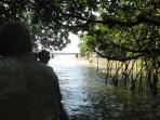 Mangrove at the Ria