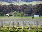 Close by to Nathan's Place: Relaxing views from local cellar doors