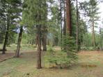 back yard with nothing but forest, hiking trails and X Country ski area right here!