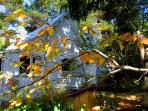 Avoca Cottage in autumn -- one of the best times of the year to be in the Blue Mountains