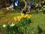 The garden in spring offers a constantly changing picture.