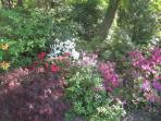 Azaleas and other ericaceae plants in the undergrowth