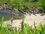 Walk from your cottage door, 10  minutes through the woods to Ceibwr Beach. No dog restrictions