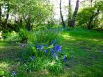 Small woodland with bluebells in bloom