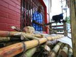 Sugar cane vendor in Port Antonio
