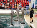 Varna Dolphinarium - 1.5 km away