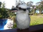 Friendly Kookaburra from Dining Deck overlooking Pool and gardens to Beach