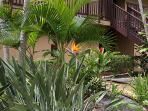 An abundance of flora