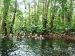 Hot springs at the Rainforest