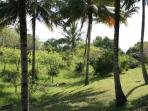 6 acres of tropical garden and coconut plantation