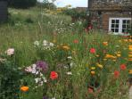 Lovely cottage garden - a haven for birds, bees and butterflies