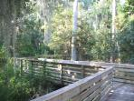 Lake Louisa State Park south of Clermont offers a great place to go bird watching.
