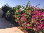 Colourful mediterranean flowers surround the villa