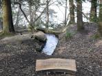 Paxton's Cascade in Treborth Botanical Gardens