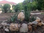Aloe Vera Garden.