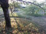 Parfois nous laissons les herbes pousser avec des chemins qui serpentent ... pour la biodiversité