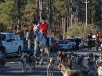 In town for Thanksgiving? Check out the Blessing of the Hounds