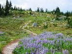 Trail to Oboe Mountain and 'Musical Bumps' from Singing Pass