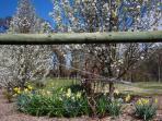 Beautiful tastes of spring at GG's