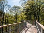 Durch die Bäume auf dem Baumwipfelpfad in Bad Harzburg