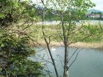 Wanderung durch die Teichlandschaft