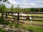 Enclos pour les chevaux