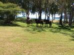 Horse riders enjoying our beach