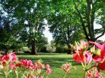 Le parc ombragé où ce trouve Oliviers, Platanes, Lauriers