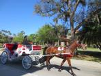 Carriage Tour of  Downtown St. Augustine, FL     #Anneflovc