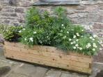 Attractive planters
