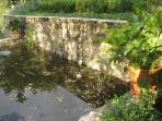 The Fish Pond!