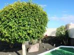 Jardín con minigolf