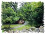 Secluded Position in mature woodland